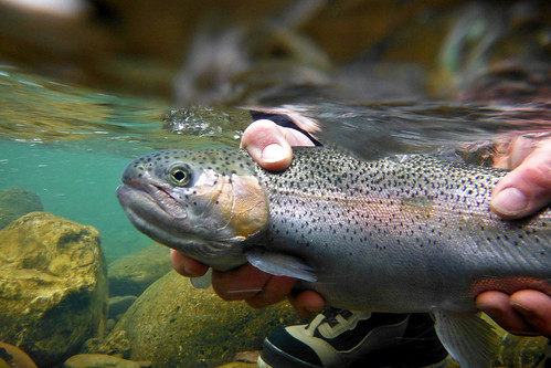 2013 - Second Annual Spring Fishing - Saturday | by Project Healing Waters Fly Fishing - Northern VA