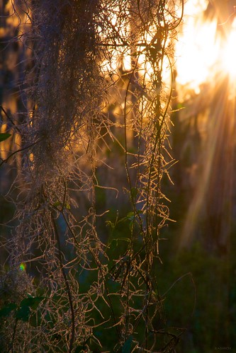 sunset sun moss louisiana lafitte bayou spanishmoss rays jeanlafitte