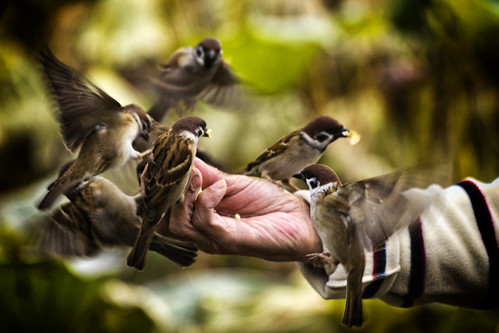 Feeding birds | by Diego Cambiaso