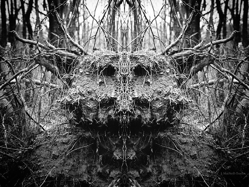 winter blackandwhite black tree smiling monster woodland dark scary woods roots creepy spooky mysterious mirrorimage gypsymarestudios jennifermacneilltraylor jmacneilltraylor