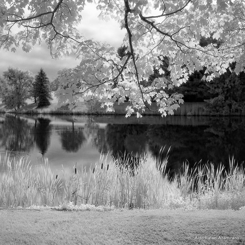light summer blackandwhite bw white lake 6x6 tlr film nature water mediumformat reflections square landscape ir pond natural kodak pennsylvania hc110 pa filter infrared epson konica grayscale 2012 honesdale 80mm selfdeveloped r72 yashicamatem kodakhc110 monotones konicainfrared yashinon80mmf35 750nm konicainfrared750nm konica750nm dyberry bowerr72ir infrared750nm