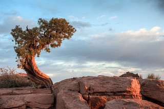 The Bonsai and the Rock | by Ralph Earlandson