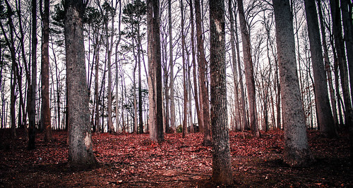 trees red sky color green colors leaves forest landscape outside outdoors photography woods chrisgardner