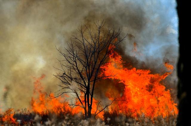 Controlled Burn 1 Hickory Knolls Saint Charles IL-4