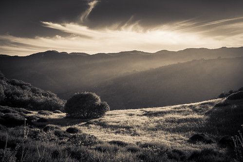 sunset sky blackandwhite sun tree nature sepia clouds zeiss landscape outdoors la scenery meadow sunrays nex