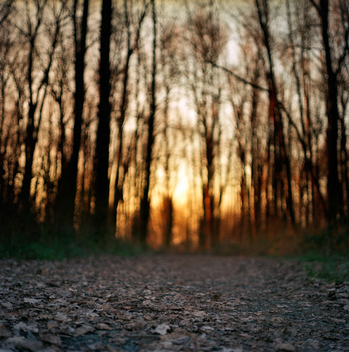 sunset 120 6x6 film oregon analog forest mediumformat square portland landscape bokeh trail pacificnorthwest pentaconsixtl kelleypointpark bluemooncamera