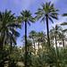 Un oasi il.licità a la ciutat