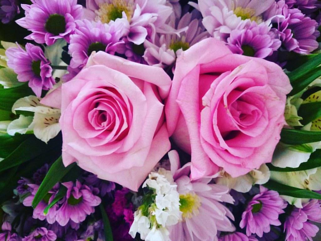 Nada Como Unas Rosas Megustanlasflores Rosas Regala