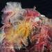 Organ Pipe Fan Worms by Danygraig