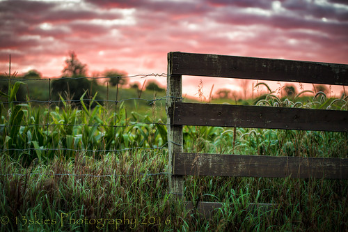 fence sunrise sun goodmorning bright border clouds redsky green field corn tassels hff happyfencefriday fencefriday fenceposts wirefence early sonyalpha99 sony skies sky beyond farming farm wood