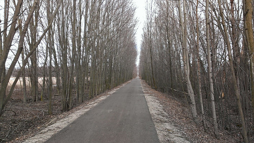 trees bikepath path michigan trail maples pathway railstotrails paved railtrail treelined macomborchardtrail armadatownship recreationtrail