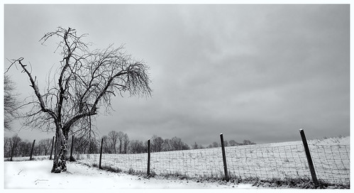 trees blackandwhite snow fence nationalpark westvirginia grandview