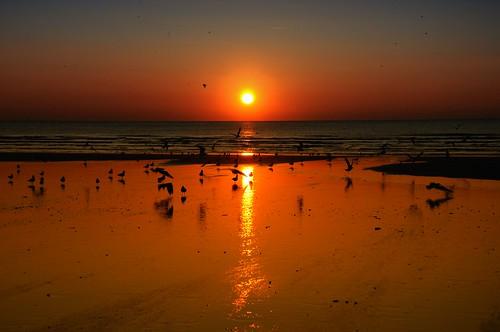 sunset sea beach scenery horizon mygearandme mygearandmepremium mygearandmebronze mygearandmesilver mygearandmegold mygearandmeplatinum mygearandmediamond vigilantphotographersunite vpu2 vpu3 vpu4 vpu5 vpu6 vpu7
