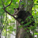 Flickr photo 'Virginia Opossum (Didelphis virginiana)' by: Mary Keim.