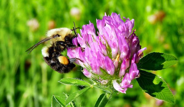 Pollen Overload 2