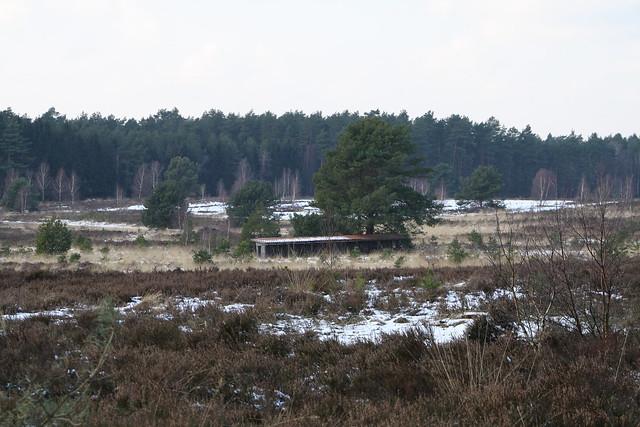 Lüneburger Heide im Winter