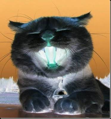 Unduh 76+  Gambar Kucing Imut Dan Menggemaskan Terbaru HD