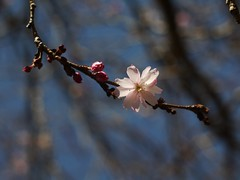 土, 2013-03-30 11:33 - ブルックリン植物園