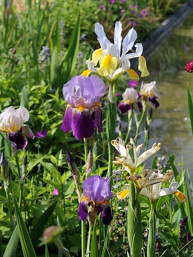 (41) Festival International des Jardins de Chaumont-sur-Loire 2011 8666597488_297a894bb6
