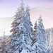Winter Snow Tree 640 by iPhoneWallpaperz