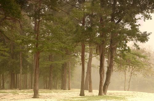 trees lana nature weather fog catchycolors landscape sand woods louisiana foggy covington gramlich canoneos5d sttammanyparish fantasticnature dragondaggerphoto boguefalaya lanagramlich falayariver boguefalayawaysidepark apr152013