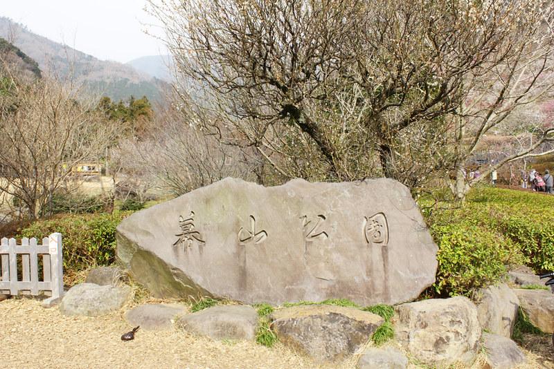 幕山_09