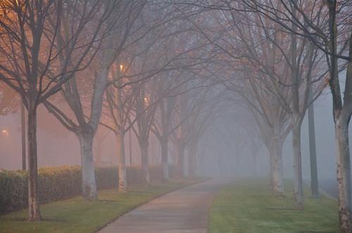 fog sunrise day pleasanton mistymorning pwgen