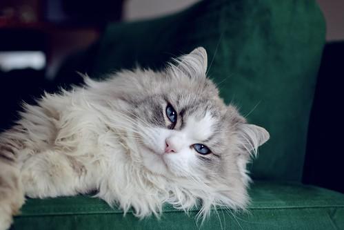 Cat firmness | by Miro Mannino