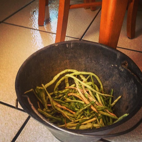 We've been eating fresh green beans from the garden like these - along with tomatoes and more - every day of our trip #garden #food #travel #Italy #Sicily | by dewelch