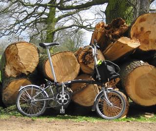 Felled trees, Osterley Park, Spring 2013