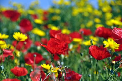 flowers primavera spring fiori granitola