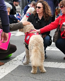 Therapy Dogs at Boston Marathon Bombing Memorial | by AnubisAbyss