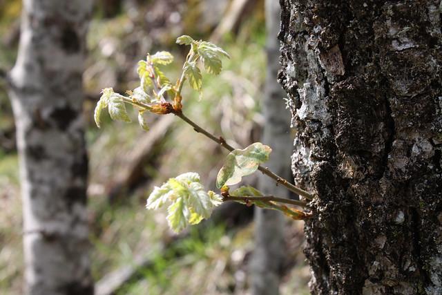 spring fragments