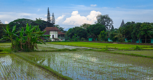 blue sony a77 java indonesia southeastasia rice ricefield ricepaddy paddies terraced terrace cloud clouds agriculture agricultural house architecture green temple parambanan prambanan