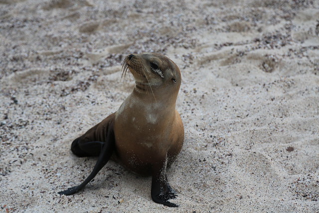 Galapagos Greeter