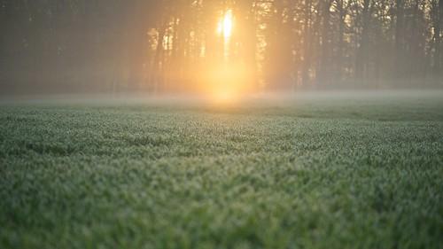 morning sun fog sunrise canon day nebel bokeh swiss foggy wiese 85mm tau f18 sonne morgen