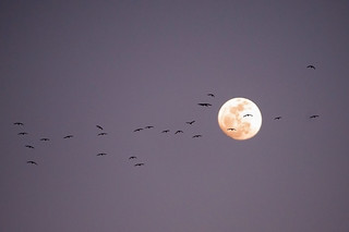 Birds and the Moon | by Extra Medium