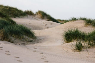 Oregon Dunes | by scottmccracken