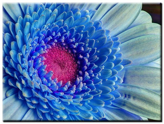 flickr:  pink  & blue