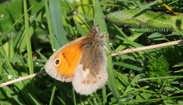 Small Heath 240516 (1)