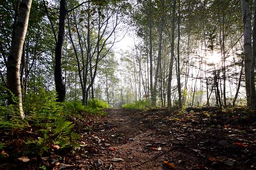 victoriapark path autumn fallenleaves shadow trees forest colchestercounty tokina1116mmdxii nikond3200 ultrawideangle mist fog morning morninglight maritimes canada novascotia ferns trail truro dirt