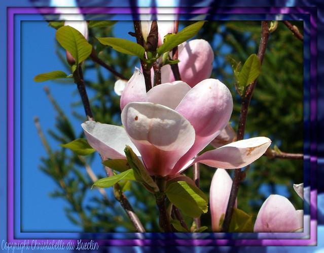 une fleur ,pour vous : bonne semaine!
