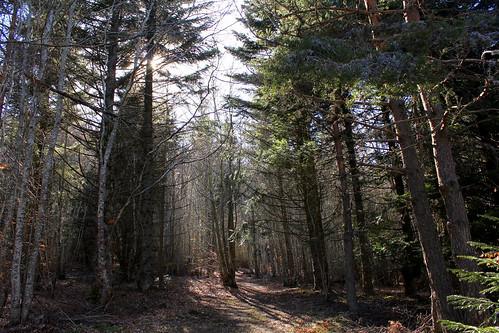 promenons nous dans les bois - Page 2 8665501030_7b9bfacdb7