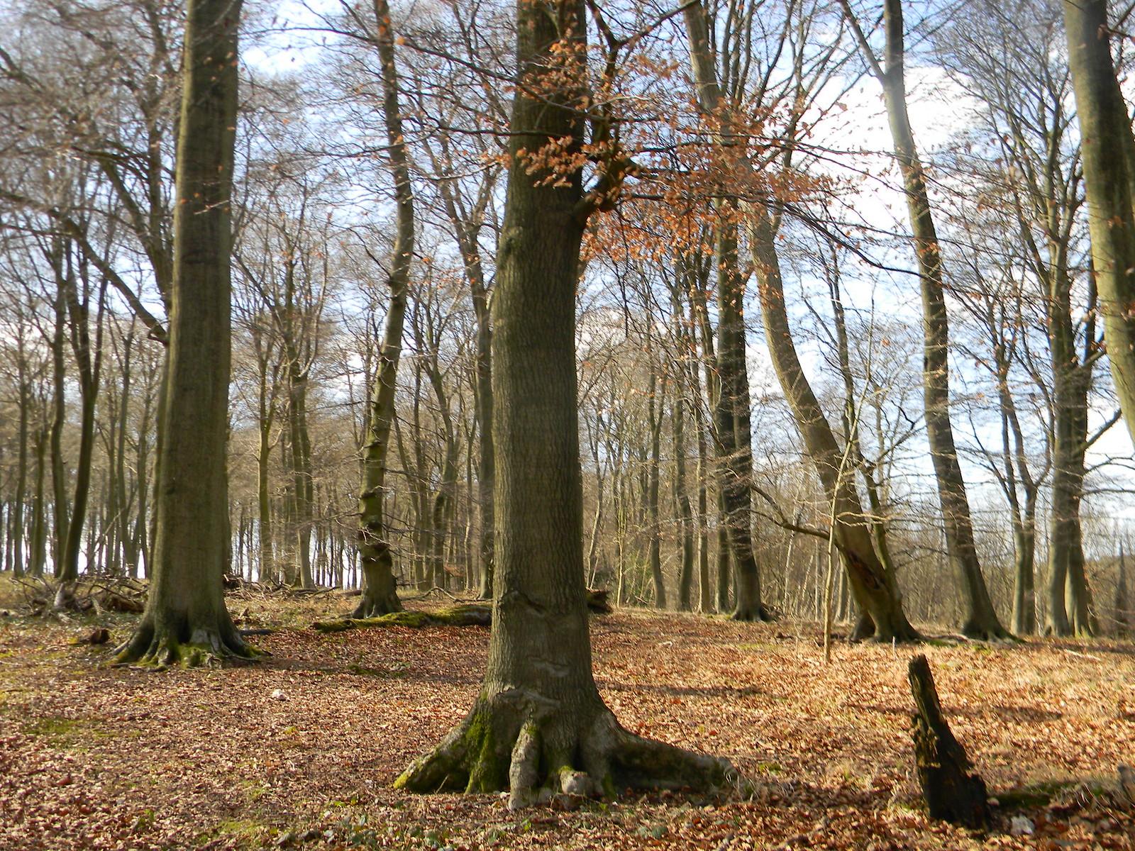 More trees Henley via Stonor (Stonor Shortcut)