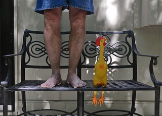 Standing on a Bench With a Rubber Chicken