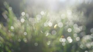 Light   by [Alan]