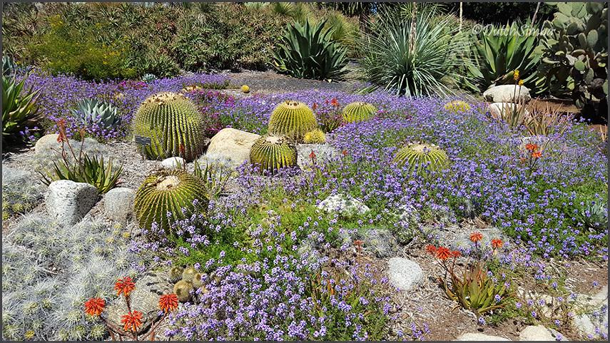 The Huntington Botanical Gardens, California | Desert Garden ...