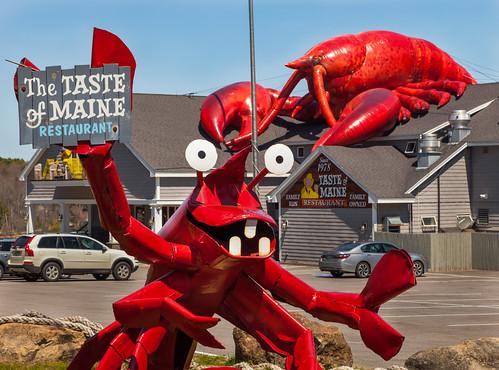 maine woolwich restaurant thetasteofmaine lobster seafood
