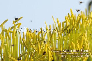 819126_orig | by milea3