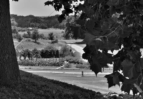 trees nature blackwhite vineyard texas unitedstates blueskies hillside marblefalls project365 colorefexpro flatcreekestate grassyarea nikond800e
